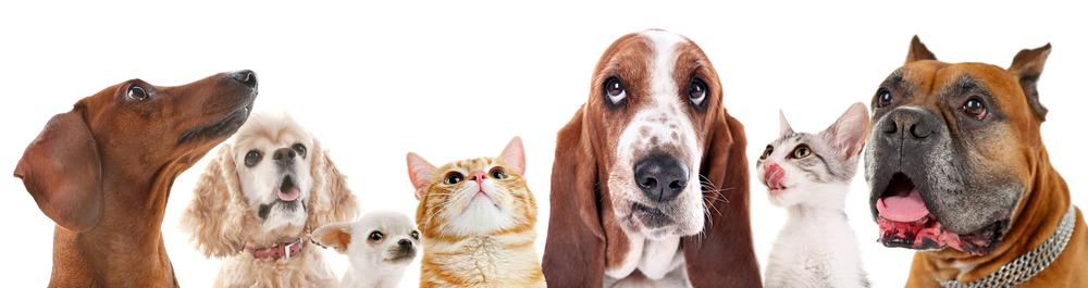 Responsabilità civile per animali domestici: chi risponde dei danni provocati?