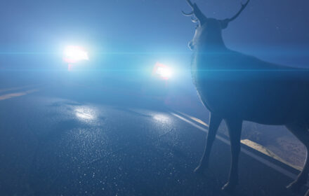 Incidenti stradali con animali selvatici: cosa provare e chi deve pagare